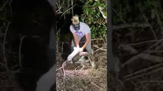 Python Huntress Captures Fat 10 Foot Python