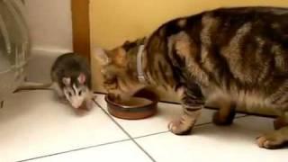 Трое - кот, крыса и ...молоко! :)))