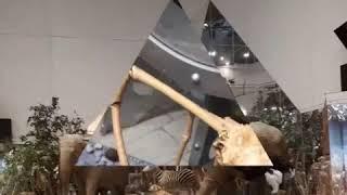 Смотреть видео Поход в Дарвиновский музей. Россия, город Москва / trip to the State Darwin Museum, Russia, Moscow онлайн
