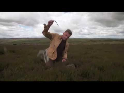 The Real Price of Grouse: Traps