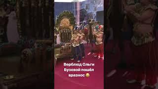 Смотреть Максим Галкин в сторис 07.06.2019. Ольга Бузова и ее верблюды онлайн
