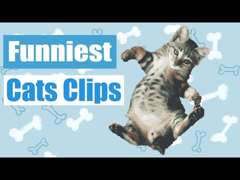 Funniest Cat Compilation 🐱 Funny Animal videos Clips [2019]