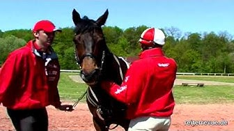 Pferd gegen Auto