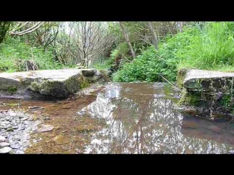 south ronaldsay woods orkney islands