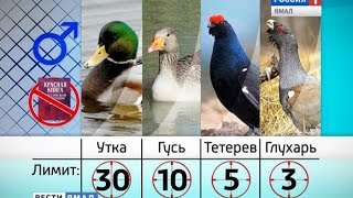 В 2015 году весенняя охота на Ямале продлится 10 дней(, 2015-05-13T17:38:49.000Z)