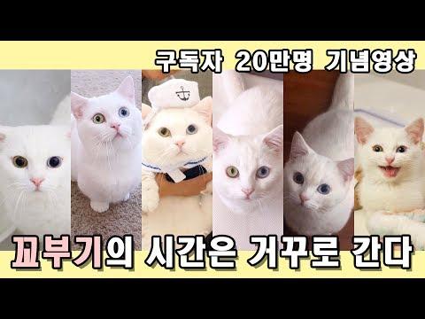 고양이의 시간은 거꾸로 간다 - 꼬부기편. 구독자 20만명 기념영상