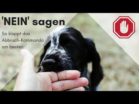 So lernt Euer Hund das 'Nein' Kommando