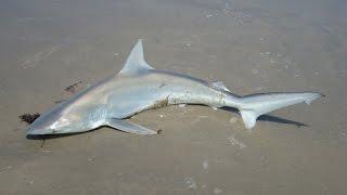 Awesome North Carolina Ocean Fishing...JAWS!