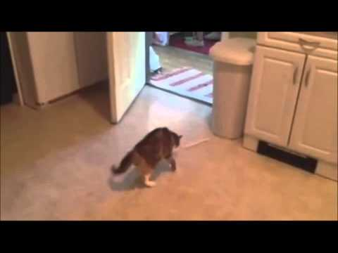 Cats Getting Scared and Jumping Compilation 2013 Part 2