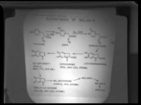 Food Sensory Science: FST107b Lecture23 - Vernon Singleton