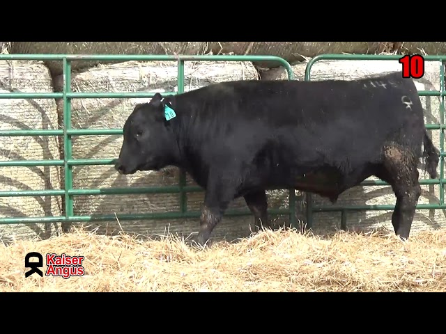 Kaiser Angus Ranch Lot 10