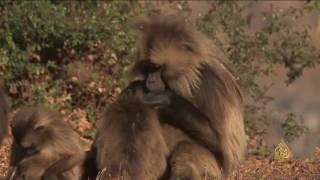 هذا الصباح- مشروعات استثمارية لحماية الحياة البرية في إثيوبيا.