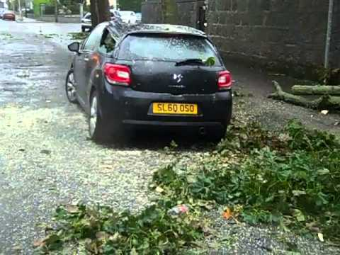 Trees brought down as high winds blast Aberdeen
