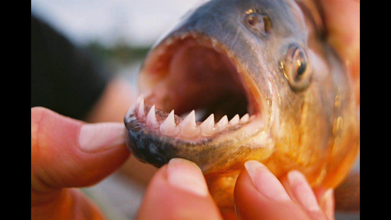 Боливия: охота, рыбалка, трофи. Амазония и Анды.