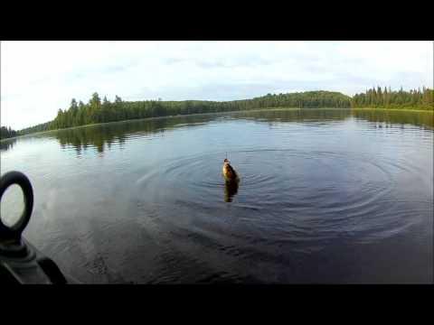 Whitefish Lake 2017