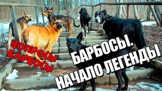 """невыдуманные истории собак из приюта """"Верность"""""""