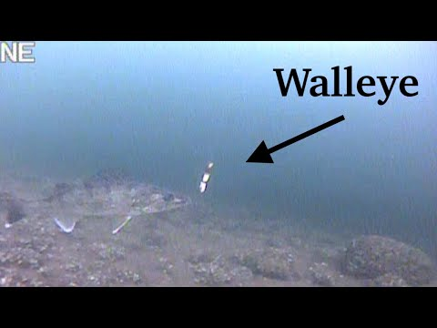 Ice Fishing For WALLEYE With UNDERWATER CAMERA | Mille Lacs Lake | EARLY ICE 2019