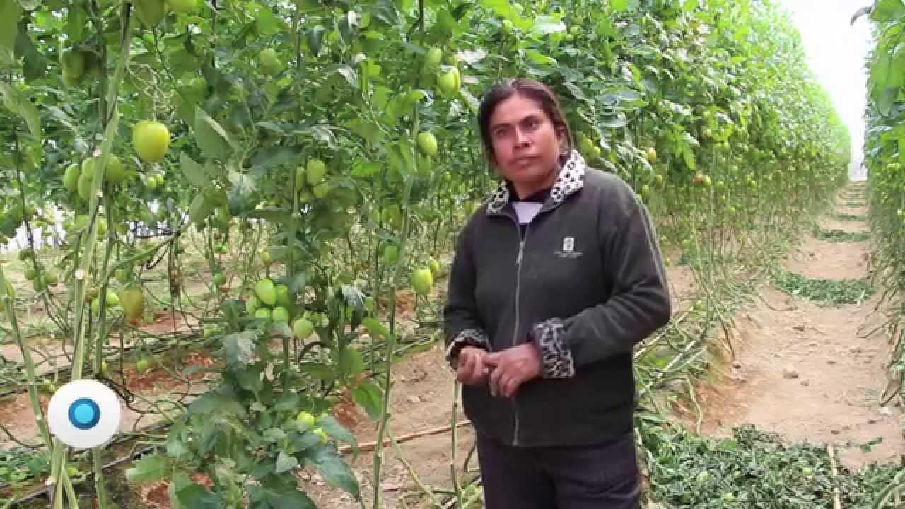 Los viveros de catalina documento indigo youtube for Viveros en oaxaca
