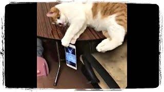 Кот и Айфон, ПРИКОЛЫ С ЖИВОТНЫМИ | Cat and Iphone, FUN WITH ANIMALS #511