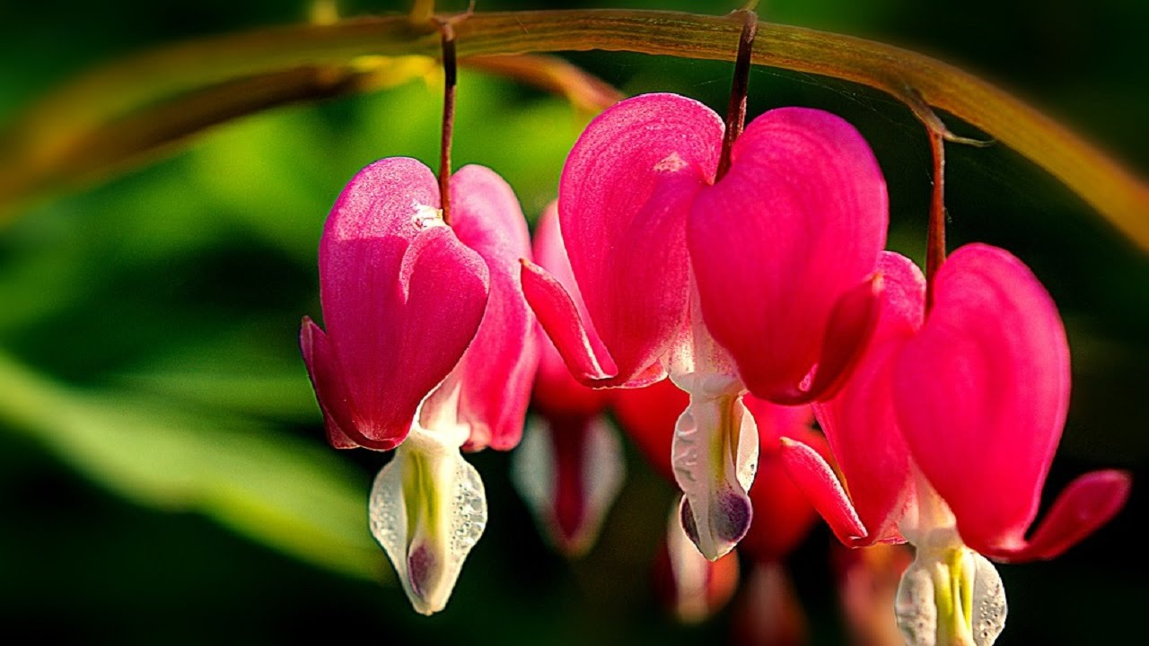 Top Most Beautiful Flowers 4k Pictures 4k Pictures Full Hq