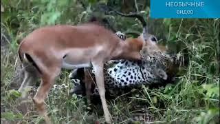 Мир животных 2018 новинка