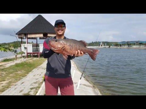 Trip to Barelang Fishing Pond in Batam, Dec 2015