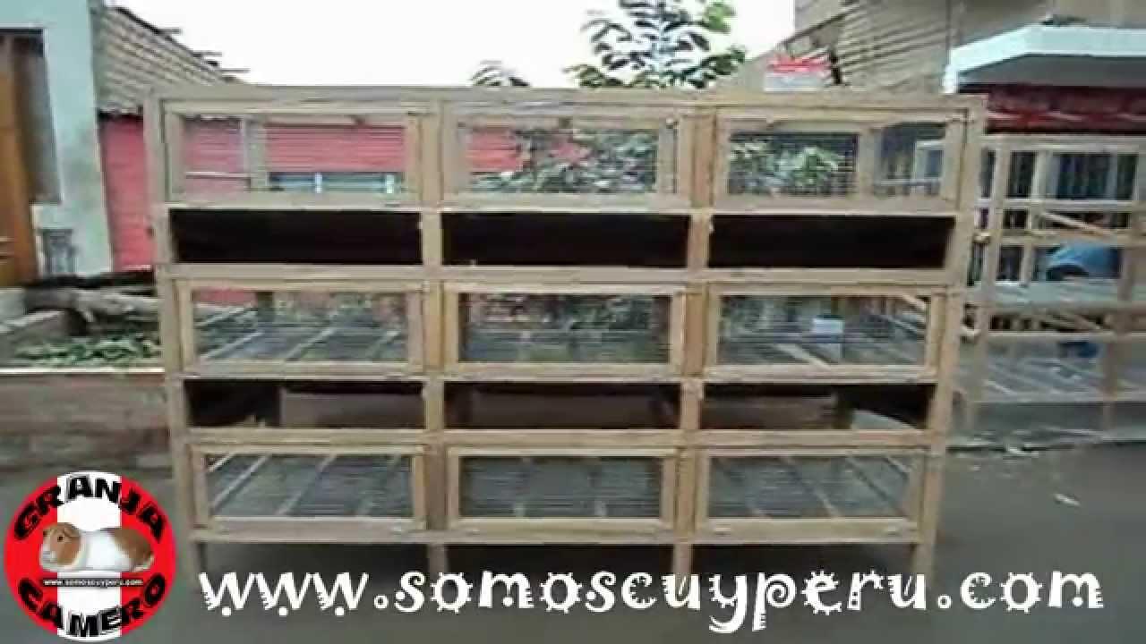 Jaula de 3 pisos para cuyes con sistema de bebederos for Jaulas para cria de peces