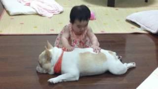 http://mirco.jp/ フレンチブルドッグのミルコ。 妹がマッサージをして...