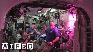 Astronauts Eat First  Space Grown Salad