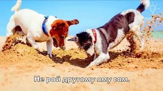 Мудрые ироничные фразы о жизни + забавные картинки 2