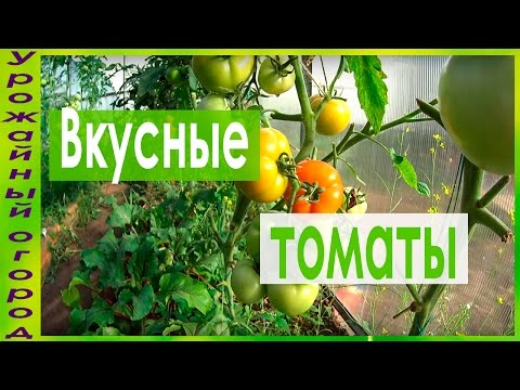 Вопрос: Чем удобрить томаты, чтобы они были сладкими и вкусными?
