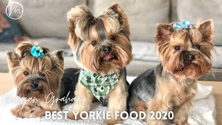 Best Dog Food For Yorkies 2020 | What I feed my Yorkie