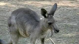 カランビン野生動物保護園.