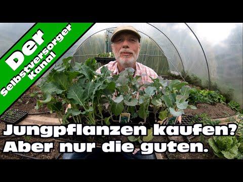 Jungpflanzen kaufen, aber die richtigen.