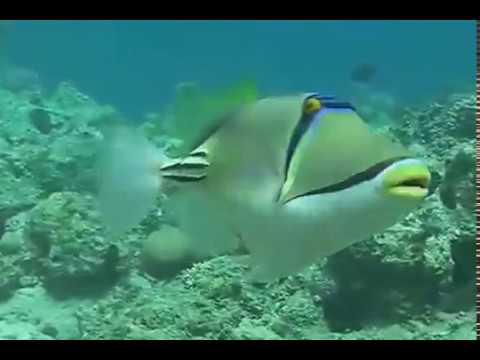 Scuba Diving in the Red Sea with Khaled Zaki - Qatar Marine