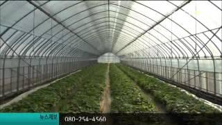 고추냉이 판매 호조[R]-투 2012-1109-5