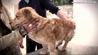 Die LESIA Tierklinik Düsseldorf ist die modernste und grösste Hundeklinik in Deutschland