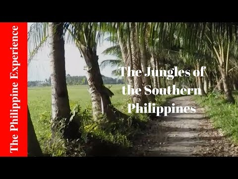 (Philippines) Braving the Jungles of Southern Mindanao, Cotabato Province (2018)