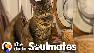 aggressive-cat-melts-when-she-gets-to-know-her-new-mom-the-dodo-soulmates