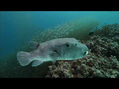 Best Ocean Life 2018: Amazing Underwater Marine Life Documen