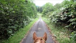 Hokkaido Japan, Horse Riding, WWOOF Japan