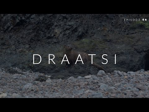 Draatsi - Episode 6: Otter Looks Around