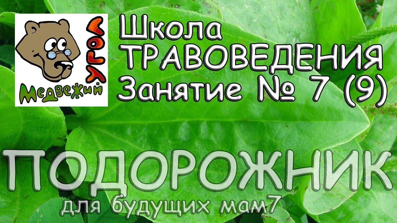 Школа травоведения. Занятие № 7 (9) ПОДОРОЖНИК для будущих мам .