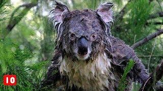 10 λόγοι να ΜΗΝ επισκεφτείς την Αυστραλία - Τα Καλύτερα Top10