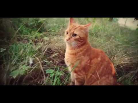 Warrior Cats Movie Trailer