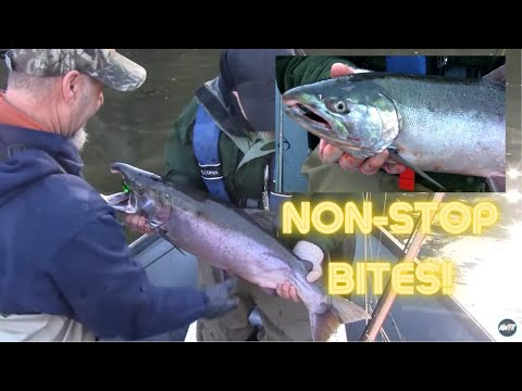 Twitching Jigs For Coho Salmon
