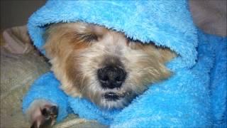Колыбельная собаки-байкера Стича.
