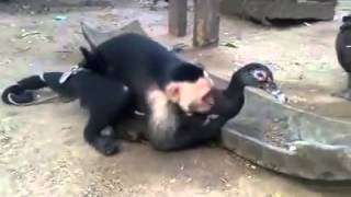 Duck VS Monkey XXX