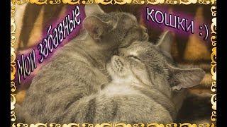 """Мои забавные кошки (озвучка кошек) + обзор на приложение """"Кошачий разговорник"""""""