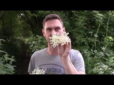 How to make Elderflower Champagne | Brewbitz Homebrew Shop